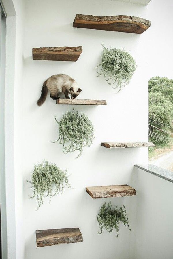 Estantes de pared para gatos y gatificar la casa