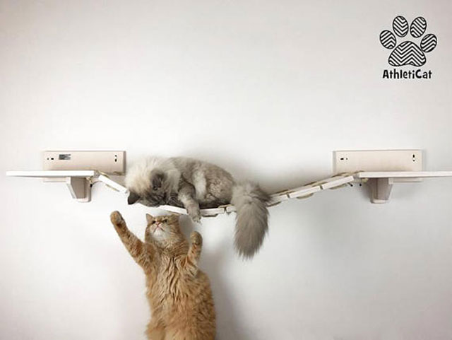Estante puente de pared para gatos